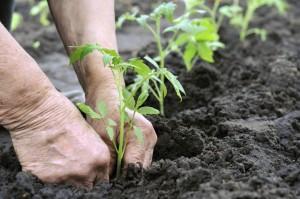 lupta-pentru-subventiile-ecologice-taie-ajutoarele-primite-de-fermieri1360311281