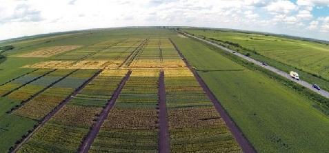 terenuri-agricole