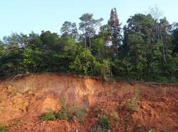 perdele-forestiere-combatere-eroziune