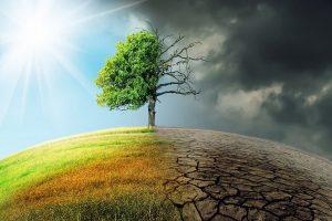 schimbari climatice investitii